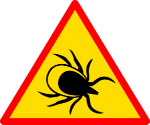 Beware of ticks!