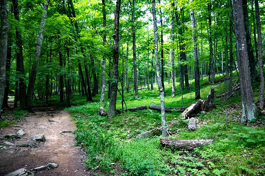 piers gorge forest